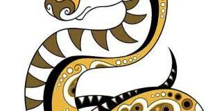 Характер и особенности людей, родившихся в год змеи