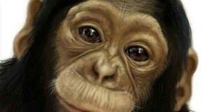 Знак зодиака обезьяна