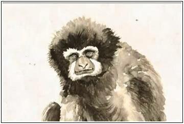 Женщина обезьяна